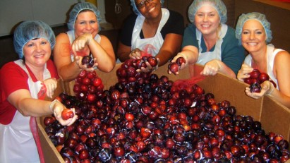 Volunteers checking plums at the Mid-Ohio Food Bank.