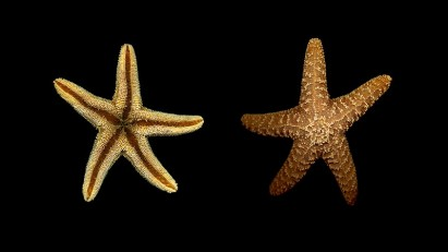 A species of starfish regulates the lives of other sea species in Makah Bay, Washington – similarly impact investors influence the philanthropy ecosystem.