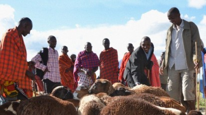 With support from KCDF, the Nkoilale Community Development Organization (NCDO) arranged a local resource mobilization drive – the community donated livestock to fundraise for the development of classrooms. Credit KCDF
