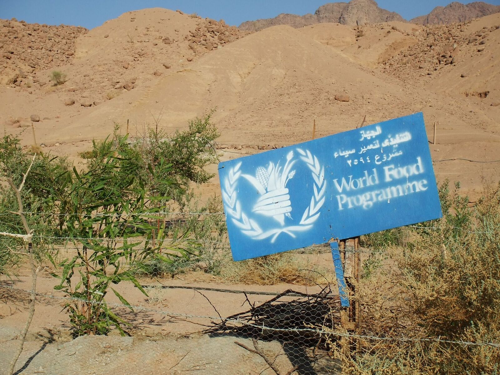 A Bedouin garden sponsored by the WFP. Project funds bring short-term relief but Bedu need lasting change