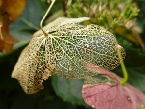 Hydrangeal nervous system. Pic Credit: Petr Olly
